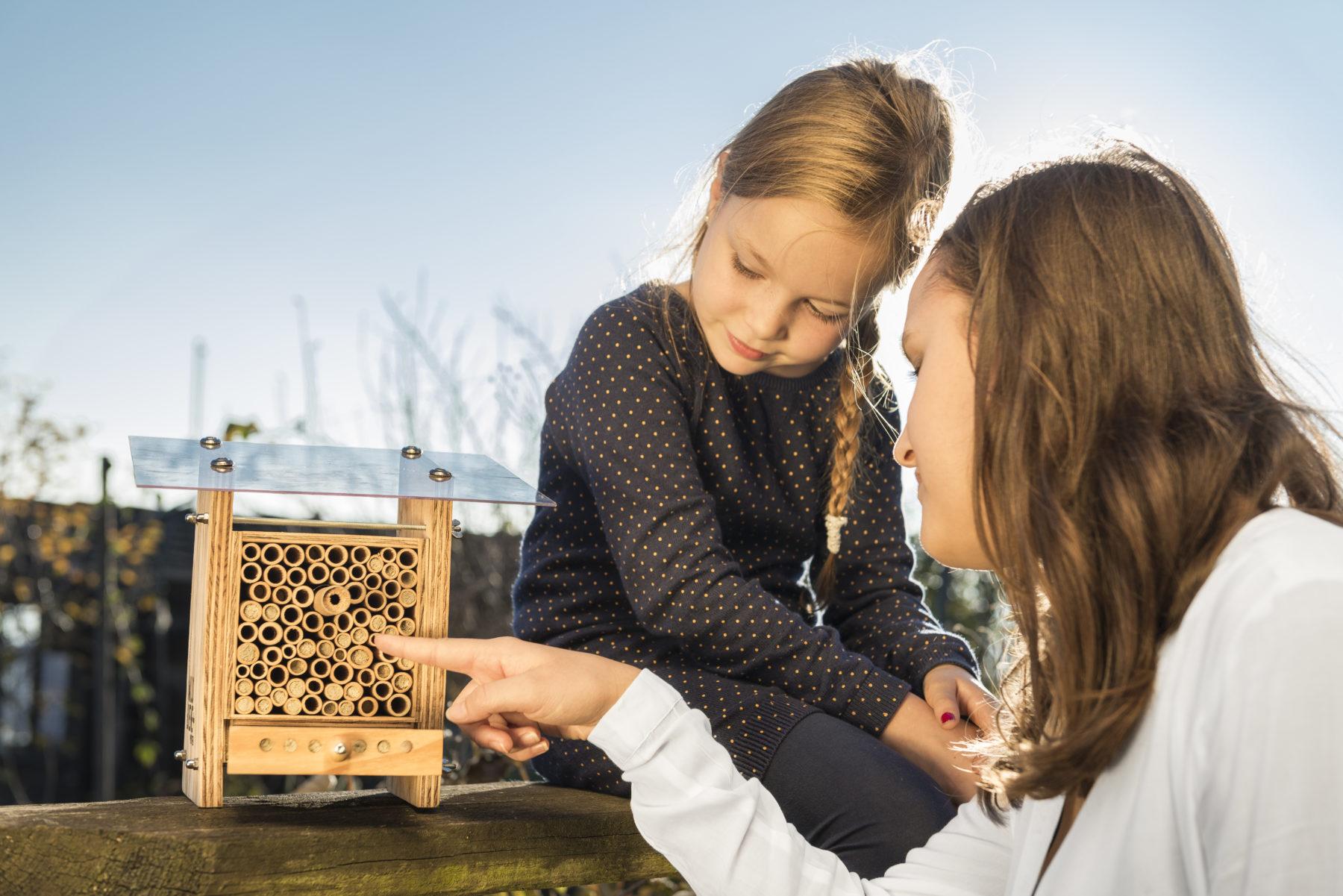 une ruche la maison pour sauver les abeilles radio lfm. Black Bedroom Furniture Sets. Home Design Ideas